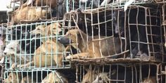 Stop the import of dog leather products in the U.S. Please SIGN and SHARE!   Here's what U.S. Customs and Border Protection needs to do to ensure that we are not importing dog leather products