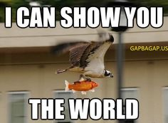 This Bird Just Saved A Poor Fish From Drowning. ~ Memes curates only the best funny online content. The Ultimate cure to boredom with a daily fix of haha, hehe and jaja's. Animal Captions, Funny Animal Memes, Funny Animals, Funny Memes, Animal Humor, Cat Memes, Funniest Memes, Funniest Animals, Talking Animals