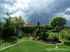 Katalpa - Catalpa - strona 13 - Forum ogrodnicze - Ogrodowisko