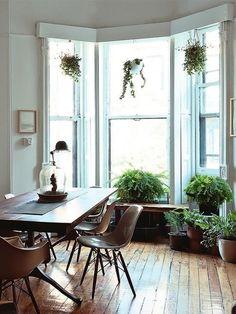 Bay window with plants