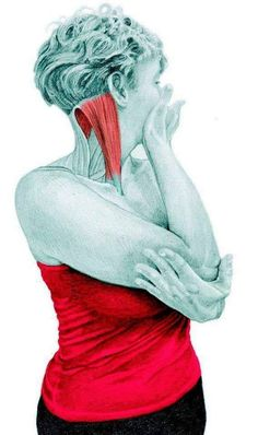 11 Neck and Back Stretching Exercises in Pictures! - The Health Science Journal