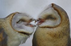 Chouettes tendresse
