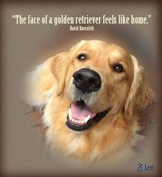 ...I've said I am too old to ever raise another puppy...but oh, how I would love to raise a Golden...they do make me feel at home, though I have never had one of my own.