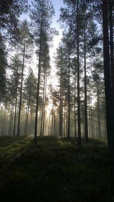 Light.  Finnish nature through my eyes - Sari Lapikisto