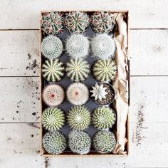 You gotta love the God-created beauty of cacti!