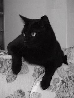 Gato preto - símbolo da capacidade de meditação e recolhimento espiritual, autoconfiança, independência e liberdade. Plena harmonia com o Universo. <BR> <BR> - Fotolog