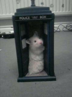The Doctor's latest incarnation didn't go to plan, the last we heard, he was running around the TARDIS in a circle, munching on seeds.