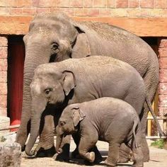 Funny pictures of funny wild animals disturbing photographers, Very funny and cute 2016 All About Elephants, Elephants Never Forget, Save The Elephants, Funny Wild Animals, Cute Baby Animals, Animals And Pets, Elephant Family, Elephant Love, Beautiful Creatures