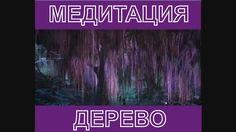 МЕДИТАЦИЯ - ДЕРЕВО