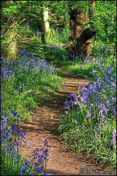 "Natural, unpaved walkway with no border. Plant ""pockets"" of interesting, native plants occasionally along walkway."