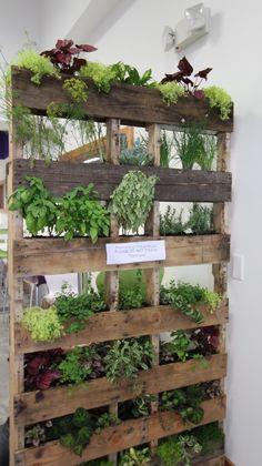 Vertical garden concept by Click Marketing Solutions, organic gardener Ben Stamats for Forever Health Cafe.