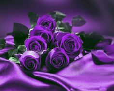 Latest Free of Charge Purple Flowers rosas moradas Tips Purple flowers will be noble flowers. They may be luxurious and nice, tasteful in addition to boheme. The Purple, Purple Stuff, All Things Purple, Shades Of Purple, Purple Satin, Beautiful Rose Flowers, Purple Flowers, Rose Violette, Purple Reign