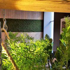 Mose vegg fra WALL-IT! Aquarium, Restaurant, Wall, Plants, Nature, Goldfish Bowl, Fish Tank, Restaurants, Plant