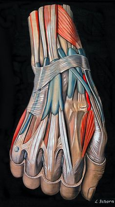 Drawing of the hand and wrist, circa 1900 by Elisa Schorn. From the anatomical literature and drawings collection at Heidelberg University--HeidICON.