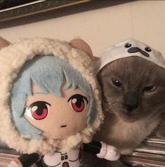 Rei Ayanami, Neon Genesis Evangelion, Funny Cat Pictures, Fb Memes, Manga, Jojo's Bizarre Adventure, Neko, Cute Cats, Anime Characters