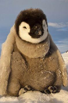 Penguin snuggle bunny