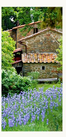 Poggio Pratelli with Irises flowering in the end of April