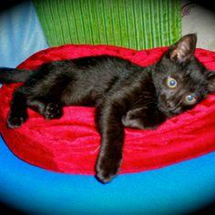 Baby Nerino, 2010