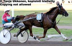 Hevosen askellajit - hevosmaailma.net