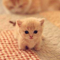 Top 18 Small Cat Breeds