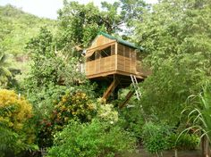 Remarkable Tree Houses To Live In With Comfortable Style And Awesome  Natural Surounding : Great Tree