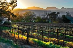 Volunteer with Via Volunteers in South Africa and visit the beautiful Vrede en Lust Wine Estate in Franschhoek in your spare time! South African Wine, Namibia, New Africa, Villa, Rest Of The World, African Safari, Wine Country, Trendy Wedding, Great Places