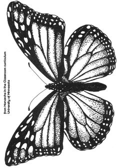 Butterfly Coloring Pattern | Free coloring pages