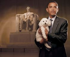 Baby ( Three-Legged Dog) She was rescued after ten years in a puppy mill #44thPresident #BarackObama political mentor – Dick Durbin – is the author of a federal bill to stop the practice of puppy mills. Barack Obama appears in the book (DollarShort) as a supporter of Baby and this cause 2010 #ObamaLegacy #ObamaHistory #ObamaLibrary #ObamaFoundation Obama.Org