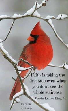 Faith is taking the first step. Quotable Quotes, Faith Quotes, Bible Quotes, Me Quotes, Great Quotes, Inspirational Quotes, Motivational, Cardinal Birds, Cardinal Meaning