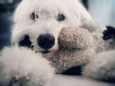 Depresión en el perro, cómo identificarla