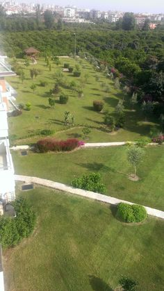 garden in olive city