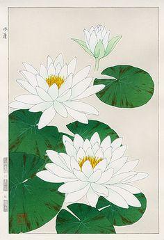 Antique prints from Shodo Kawarazaki Spring Flower Woodblock Prints Botanical Art, Botanical Illustration, Illustration Art, Japanese Painting, Japanese Art, Watercolor Paintings, Art Paintings, Lotus Flower Art, Art Asiatique