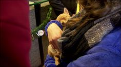 """""""John"""", a three-month-old Chihuahua/Pomeranian mix, was stolen from the Oregon Humane Society on Saturday. He was found on Monday and reunited with his family on Christmas Day."""