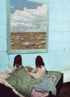 Bought this today. | Count sheep. BETH HOECKEL