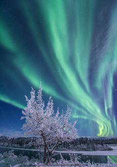 auroras. northern lights. polar lights. arctic. antarctic. space weather. dawn. magnetic midnight.