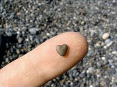 even a tiny heart is capable of great love