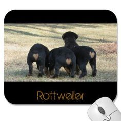 Rottweiler Babies ~ Look like little tan hearts from behind