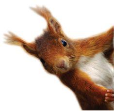 Squirrel Purple Squirrel, Art And Craft Design, Chipmunks, Cute Animals, Creatures, Birds, Nature, Hedgehogs, Squirrels