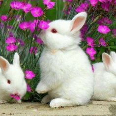 Pin By Carol Geraci On Spring And Easter