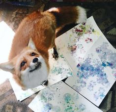 This crystal loving, artsy red fox will is your new favorite Instagram account.