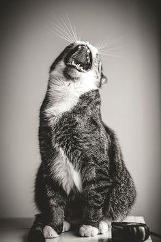 ohhhh!!! fa fa laa laa- Hey bud, you inturupted me!!! GRRR. Sorry :(