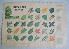 Paper leaf placemat - Something like this might be great for fall