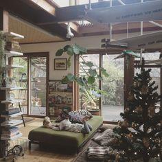 yururi-8239223さんの、部屋全体,無印良品,本棚,IKEA,ソファ,クリスマス,休日,ウンベラータ,クリスマスツリー,ソファーベッド,雑誌収納,無印良品 ソファ,モチーフ編み,本棚DIY,IKEAの棚,ニトリのツリー,こどもと暮らす。,のお部屋写真