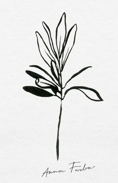 A note on plant drawing — Botanical illustration studio by Anna Farba Botanical Tattoo, Botanical Art, Pattern Illustration, Botanical Illustration, Gouache, Plant Sketches, Plant Tattoo, Artist Sketchbook, Plant Drawing