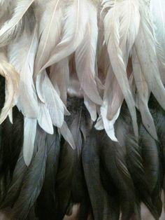 ostrich feathers #fashion #JovaniFashions #Jovani #feathers