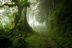 green. forest