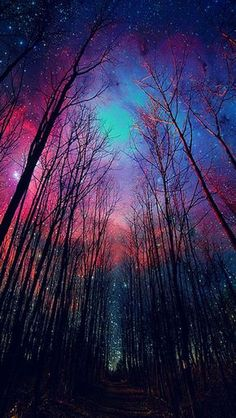 Milky Way colored sky and winter trees, made visible by time lapse. Beautiful World, Beautiful Places, Amazing Places, Beautiful Forest, Beautiful Scenery, Beautiful Sunset, Beautiful Landscapes, Ciel Nocturne, Galaxy Wallpaper