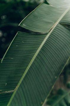 Jardin des Serres d'Auteuil in Paris by Haarkon. Plant Aesthetic, Nature Aesthetic, Tropical Leaves, Tropical Plants, Green Leaves, Plant Leaves, Wallpapers En Hd, Plants Are Friends, Green Plants