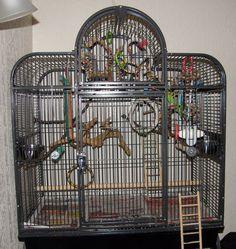 Great parakeet cage planning.