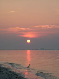 #Sunrise at #Sanibel #Island #Florida. The Crane was finding an early morning snack...